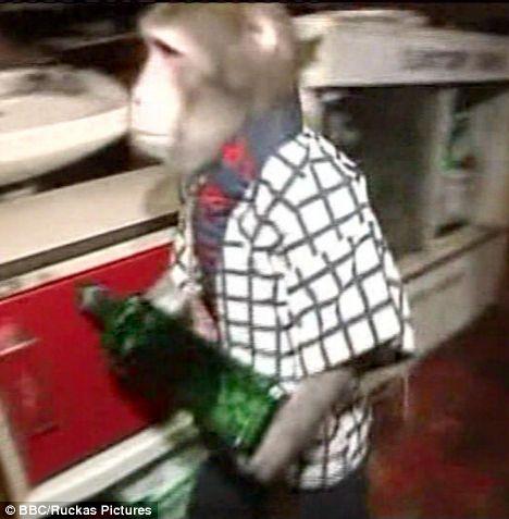 monkeywaiter