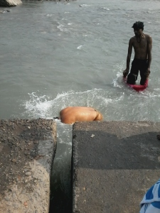 Este é meu sogro dando um mergulho no Ganges, em Haridwar, no mês passado.