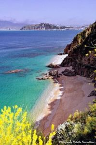 argelia1
